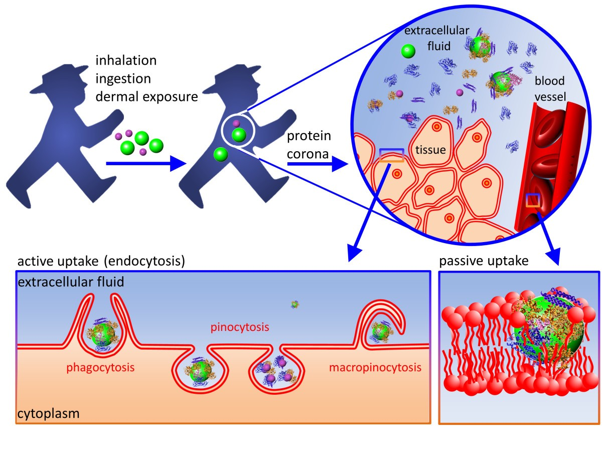 applications of gold nanoparticles in cancer nanotechnology
